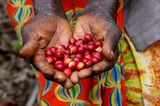Specialty Coffee - Learn more about Kenya