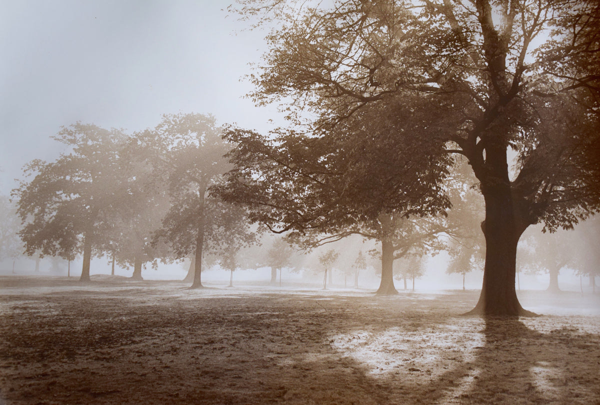 Autumn trees Limited Edition Photographic Print
