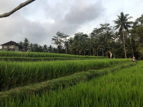 Making the most of 3 weeks Island hopping in Indonesia - rice paddy ubud