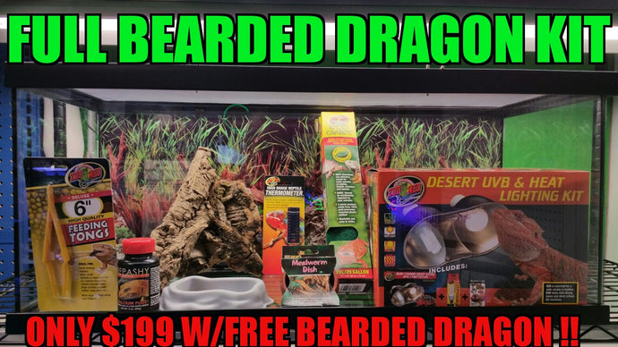 Bearded Dragon Kit