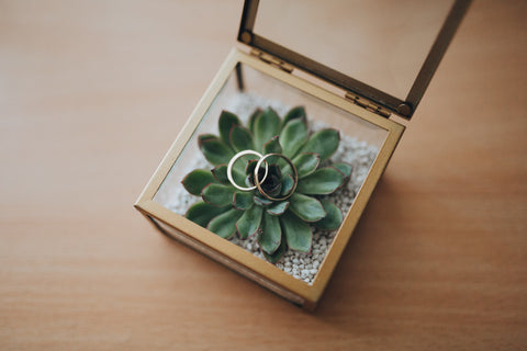 wedding rings in a terrarium