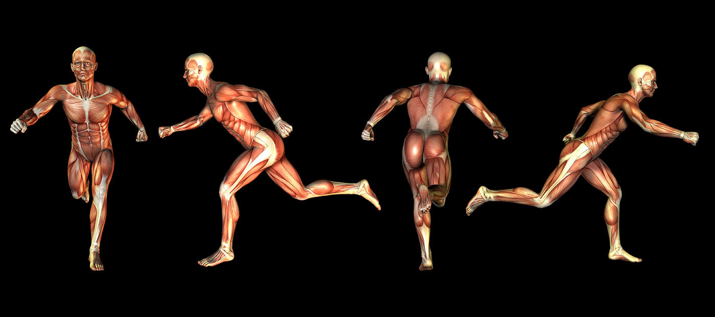 anatomical images of runner showing muscles