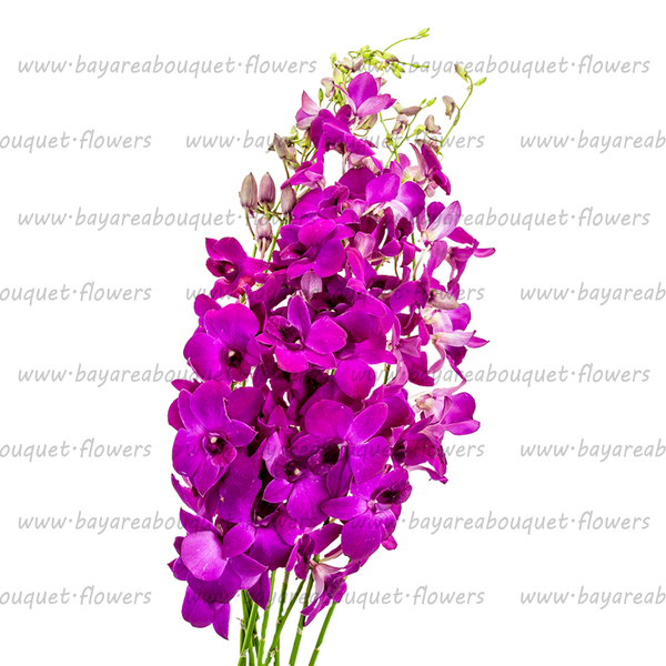 DENDROBIUM ORCHIDS PURPLE
