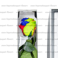 PRESERVED ROSE SINGLE STEM RAINBOW