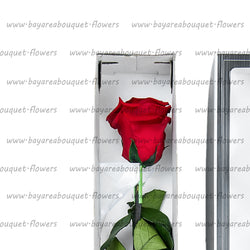PRESERVED ROSE SINGLE STEM CLASSIC RED