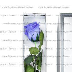 PRESERVED ROSE SINGLE STEM VIOLET