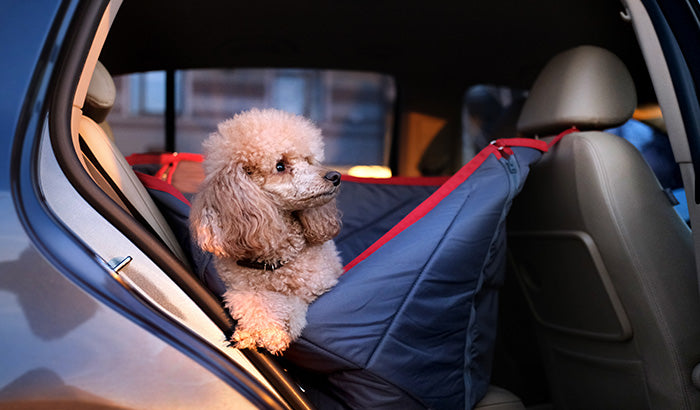 How to Keep Your Pup Comfortable on the Road