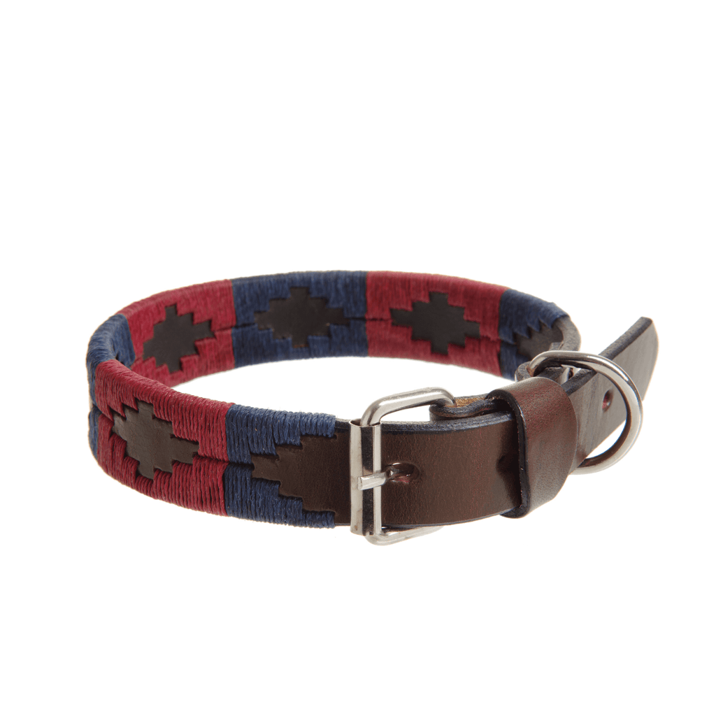 Household Division Dog Collar Darley Lifestyle