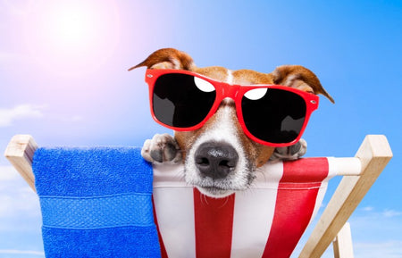 10 Ways to keep your dog cool in the summer