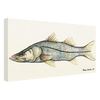Giclees on Canvas - Sir Snook
