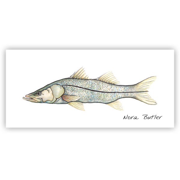 Sir Snook Limited Edition Print
