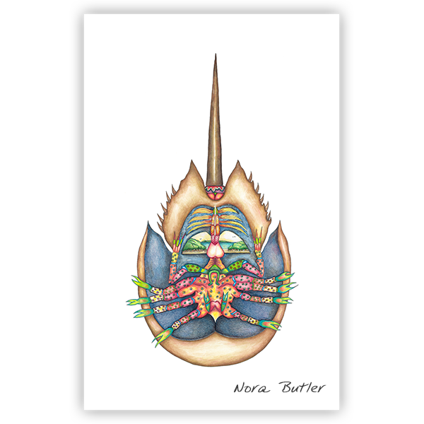 Horseshoe Crab Limited Edition Prints