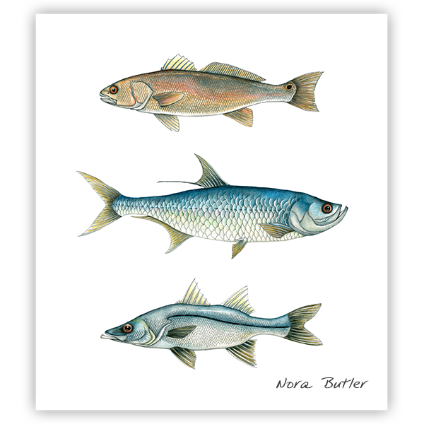 Trio Grande Limited Edition Print