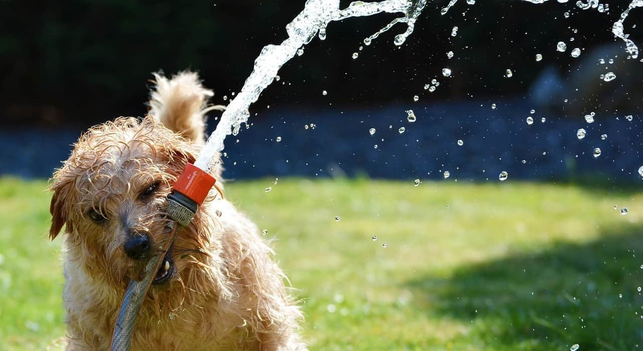 How To Keep Your Dog Safe in Summer