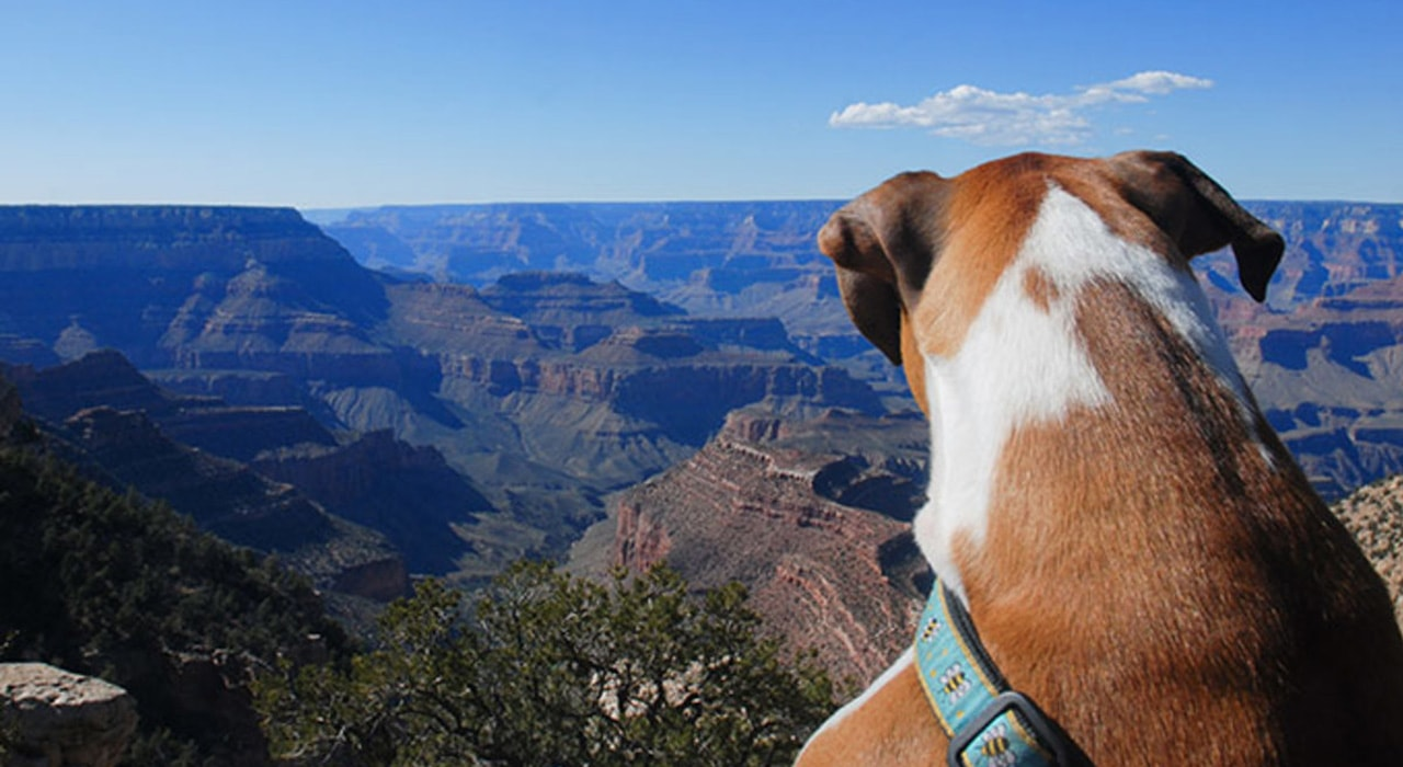 Planning a Pet Friendly Vacation