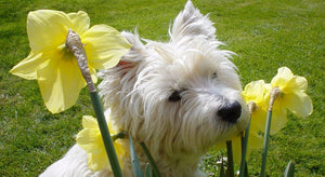 How to keep you dog safe in the spring?