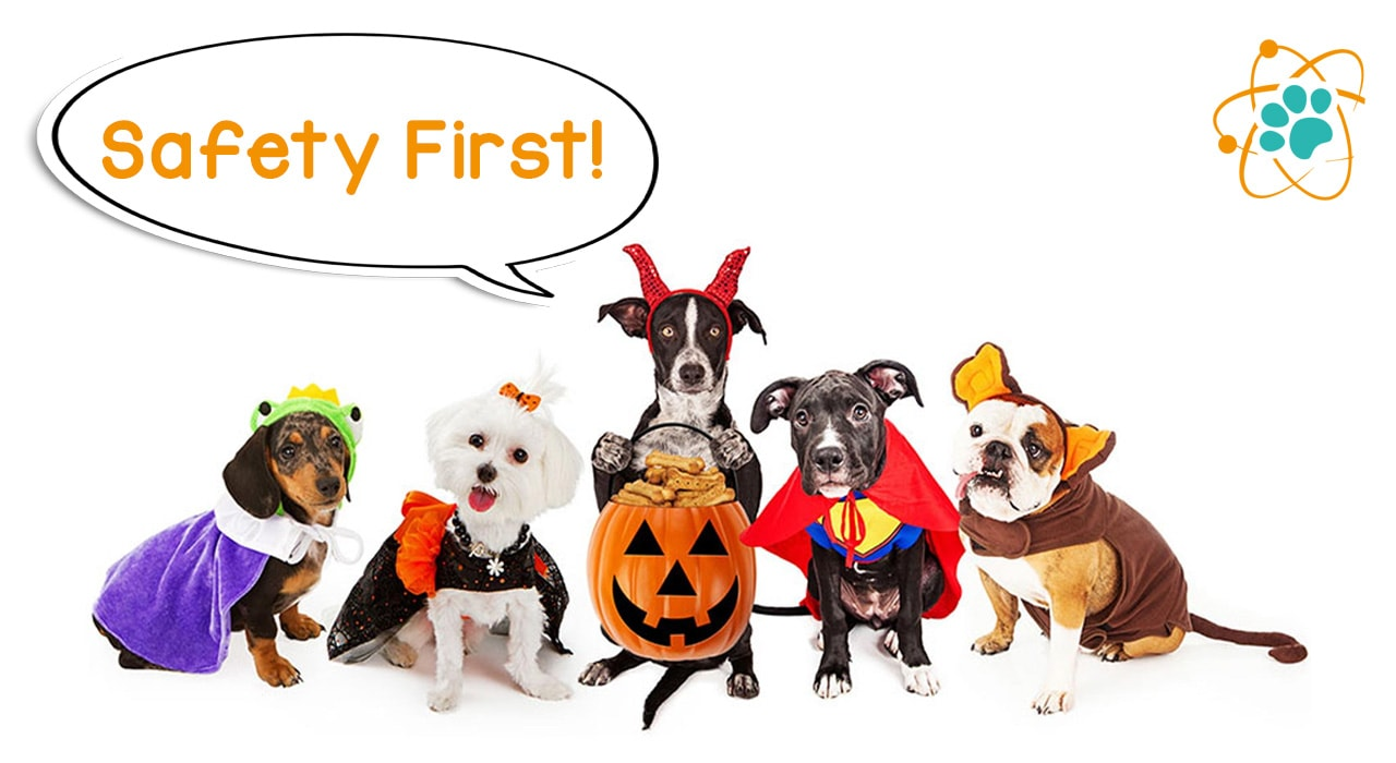 Paw Theory's 5 Dog Safety Halloween Tips