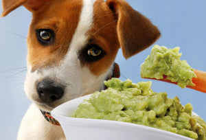 Can My Dog Eat This? 5 Spring Seasonal Fruits Dogs Can't Eat