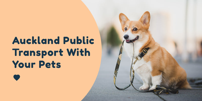 Auckland Public Transport With your Pets