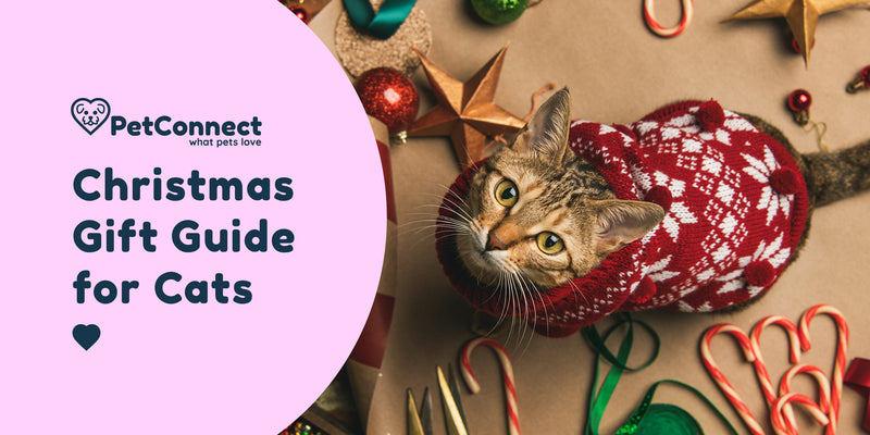 Christmas gift guide for cats image