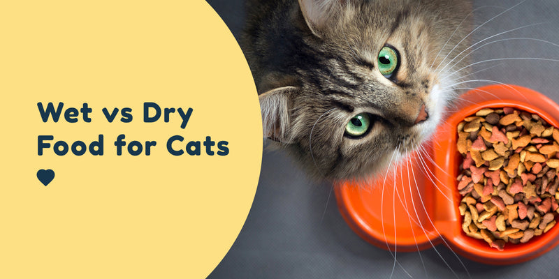 Wet vs Dry Food for Cats