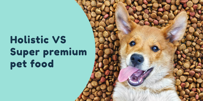 Holistic vs super premium dog food pet connect