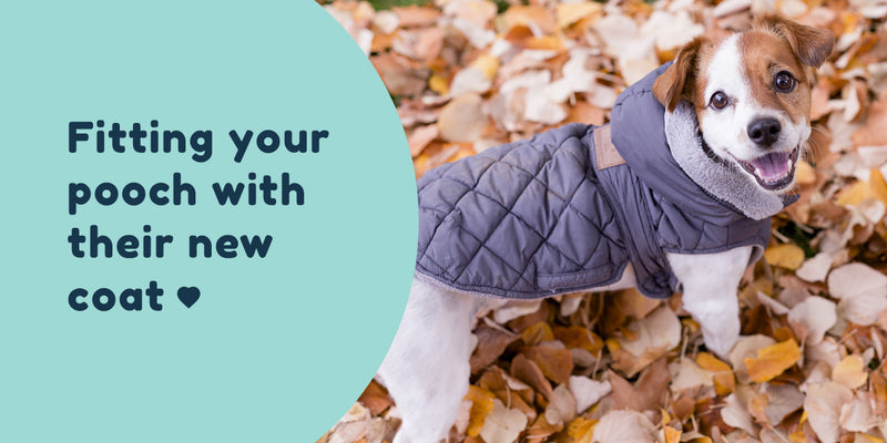 Fitting your pooch with their new coat