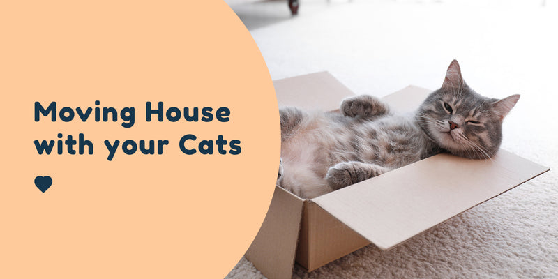 moving house with your cats pet connect blog