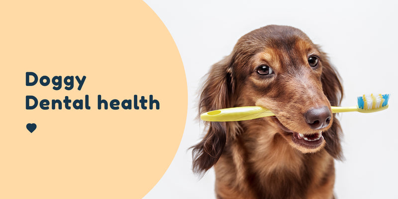 dog dental health teeth toothpaste toothbrush Pet Connect