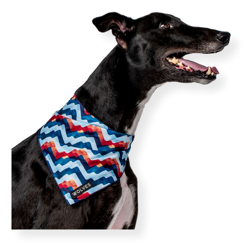 Wolves of Wellington Dog Mesh Bandana Maverick