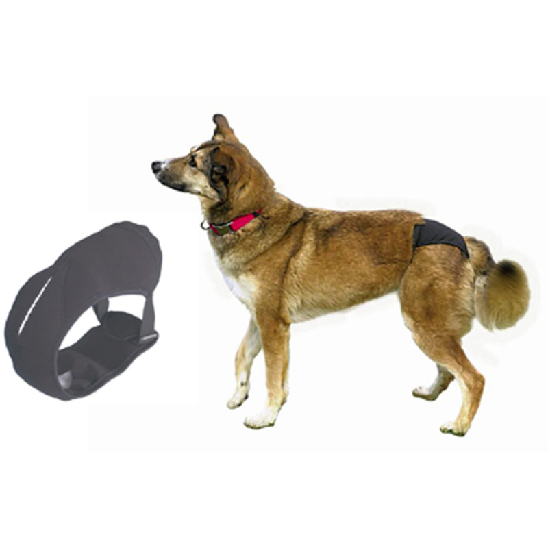 Wolves of Wellington Dog Harness Indy