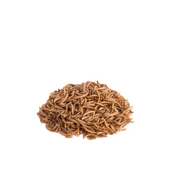 Topflite Dried Mealworms 125g