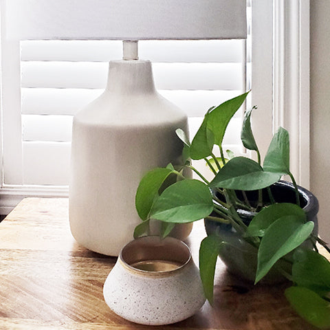 decorate with pothos plant in your home