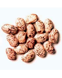 25KG Whole Dry Pinto Beans