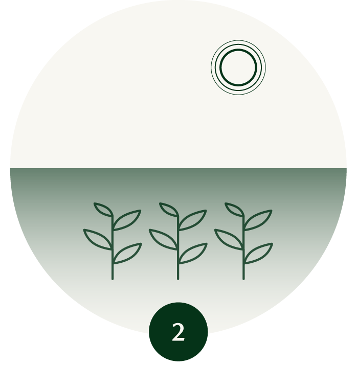 Shaded Green Tea Leaves Icon