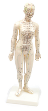 XC504 Acupuncture Model Female