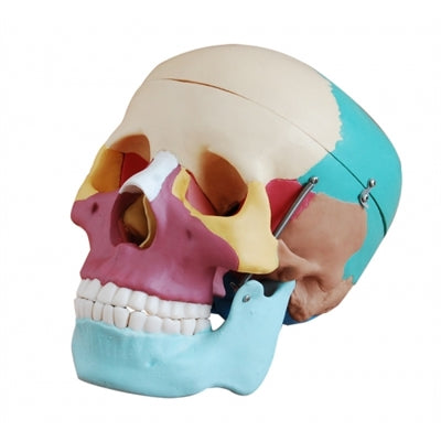 XC104C Colored Skull