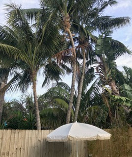 HAVANA umbrella backyard plam trees