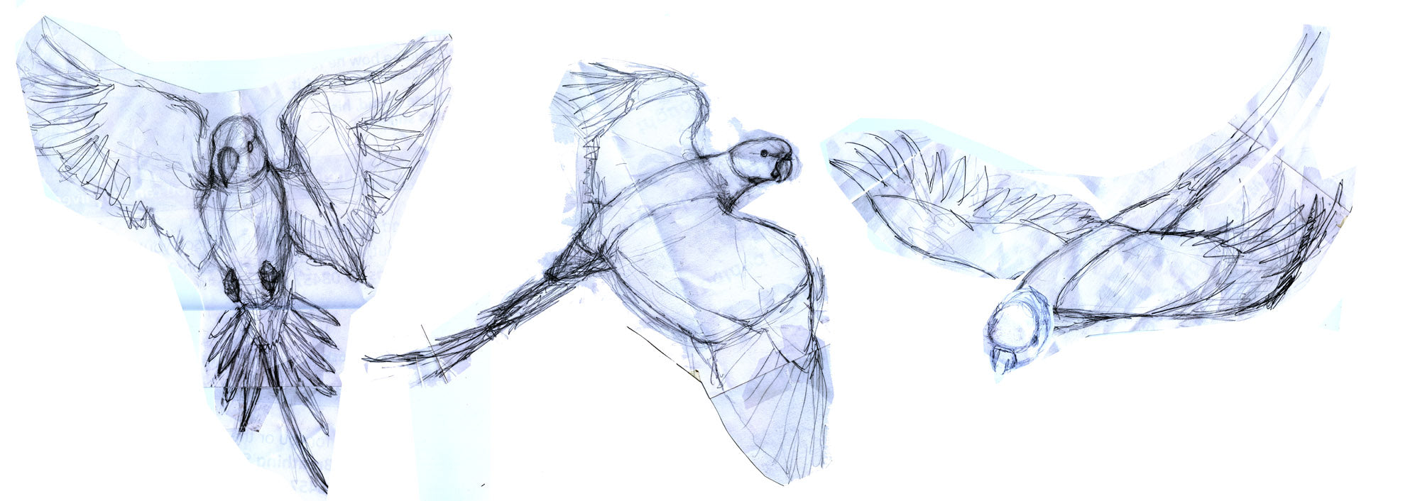 Sketches of flying parakeets