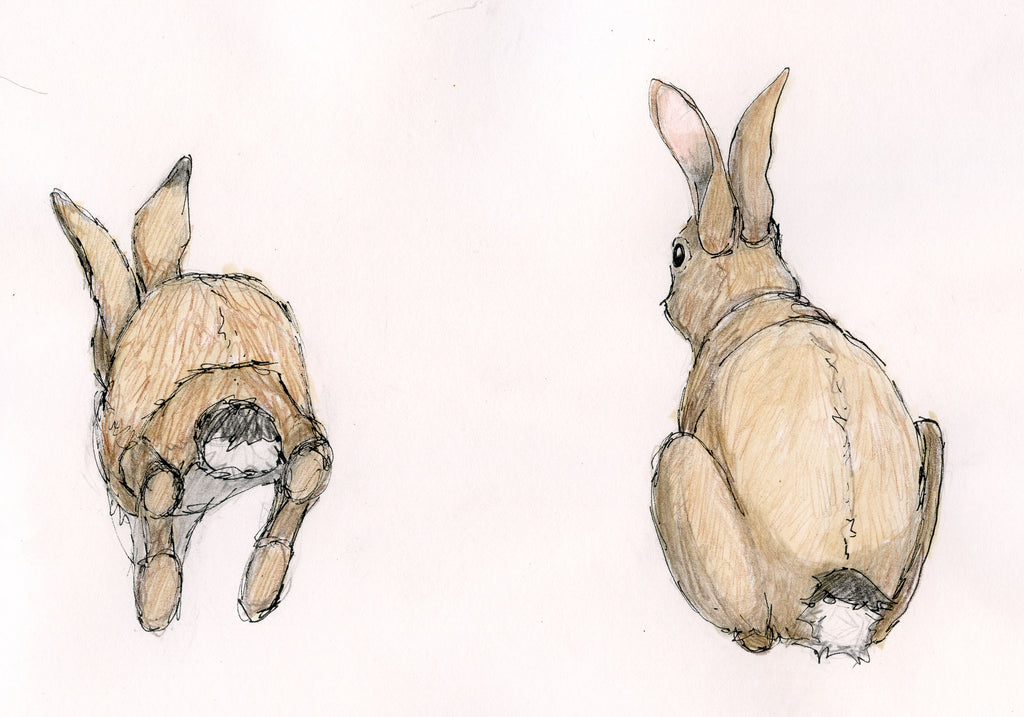 Rejected rabbits