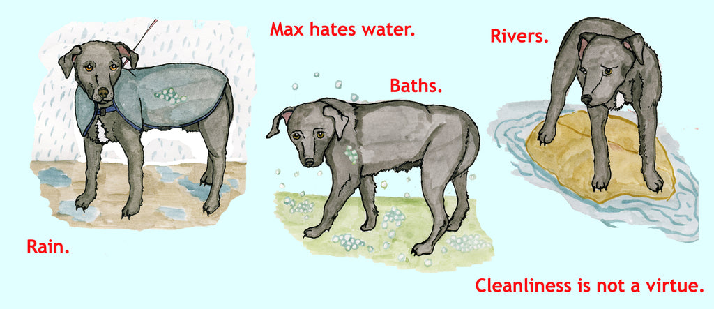 Max hates water