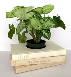 Book Planter in White