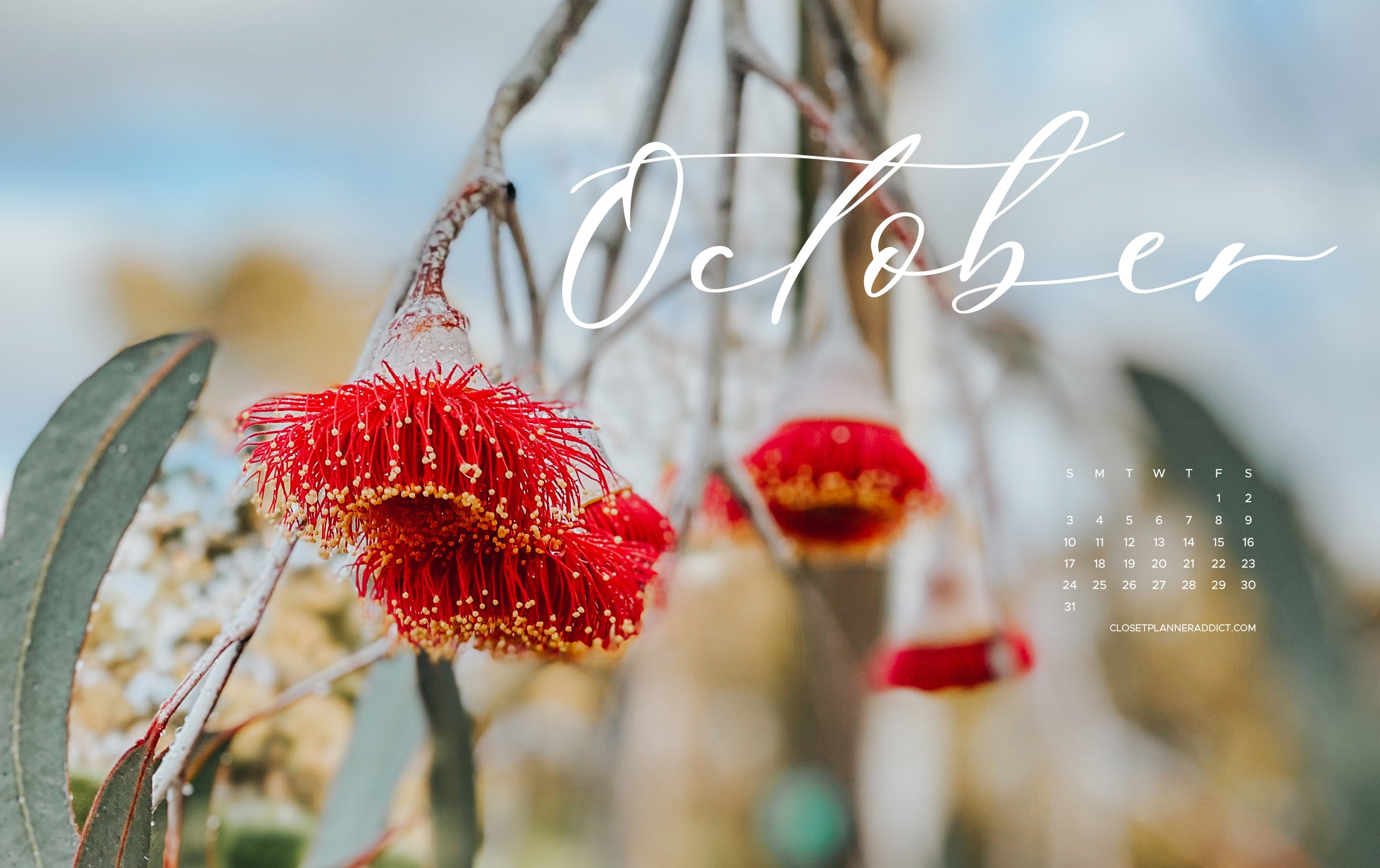 Free Download October 2021 Wallpaper by Closet Planner Addict