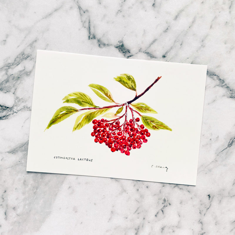 Cotoneaster Lacteus Postcard by Closet Planner Addict (PC-003)