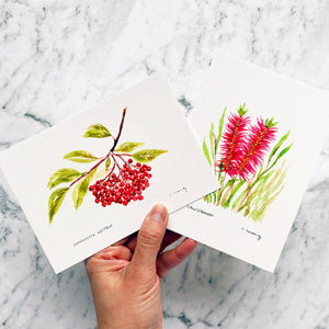 Callistemon Postcard by Closet Planner Addict (PC-004)