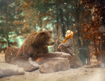 Digital background / Bear in the Forest