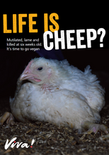 Life is Cheep?: Broiler Chicken Leaflets x 50