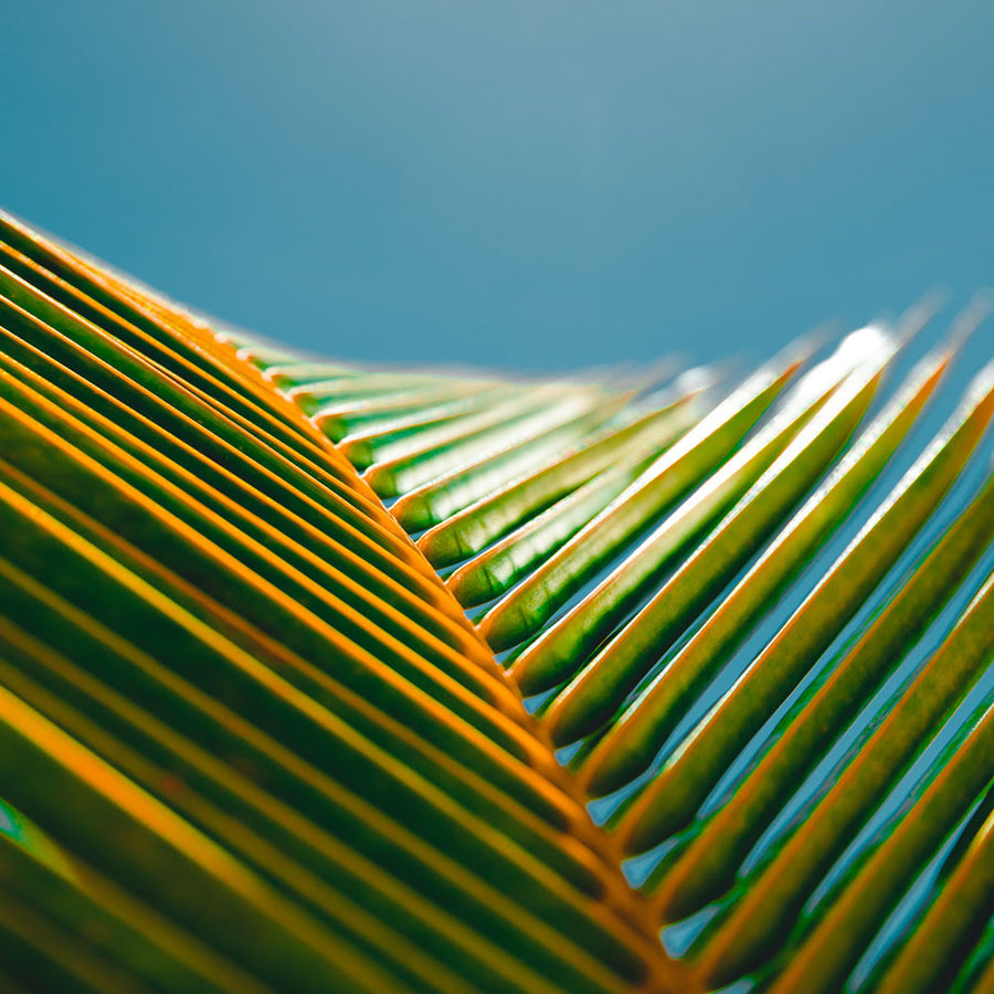 Palm Leaf in the Sun