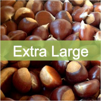 Extra Large quality, farm fresh chestnuts for sale online, buy direct retail from farmer