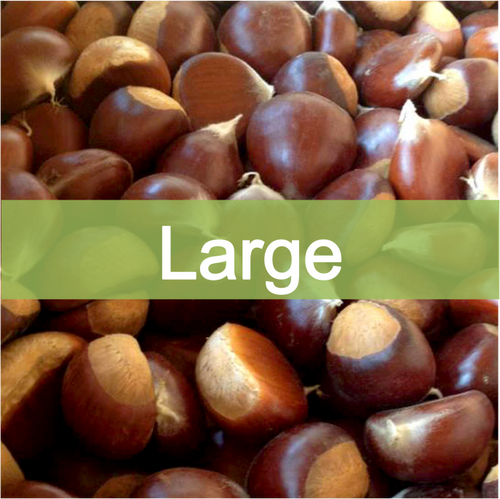 Large quality, farm fresh chestnuts for sale online, buy direct retail from farmer